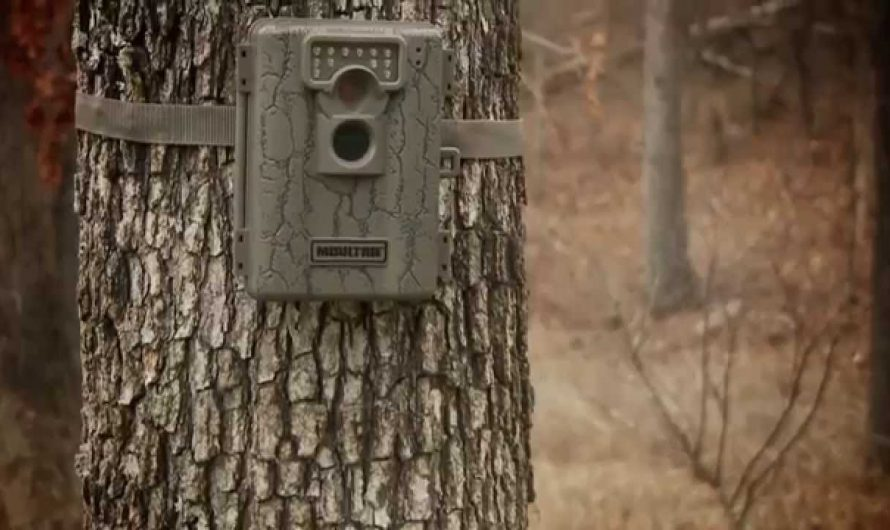Benefits of Using Moultrie Cameras