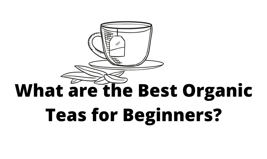 What are the Best Organic Teas for Beginners?
